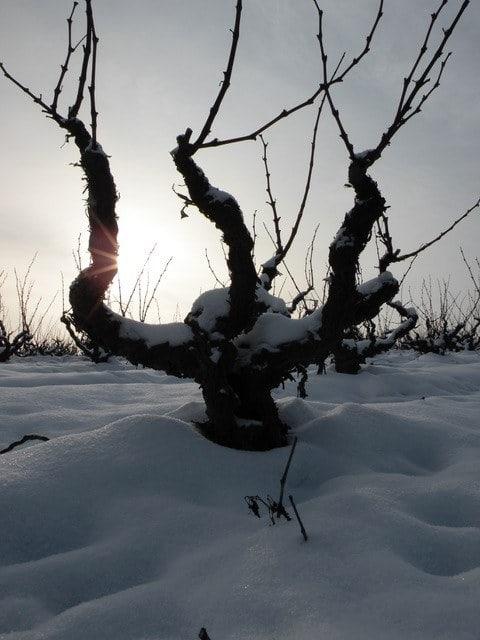Panneau 4 - Texte - Image -> Vin dans la neige